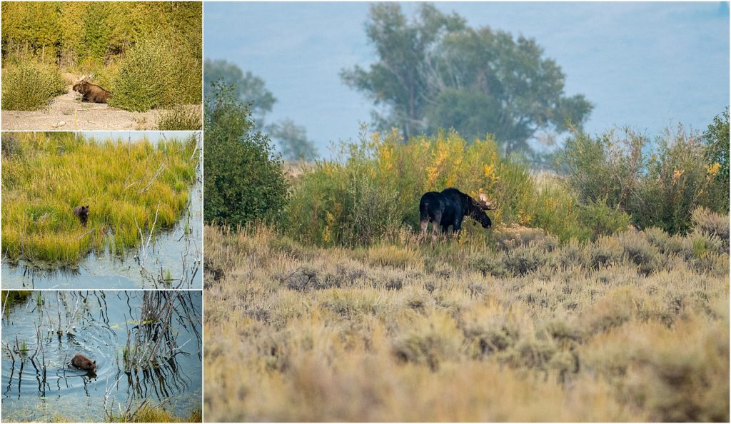 Visiting Teton National Park was the best way to view wildlife in the area